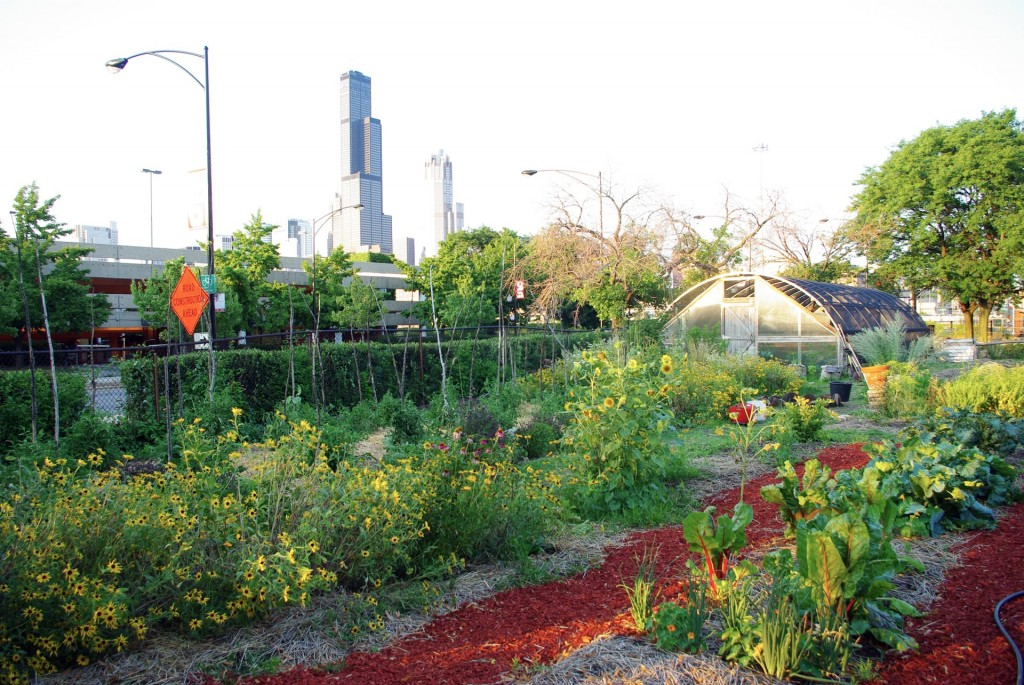 Mobile Seed Story Broadcasting Station visits the Hull-­‐House Urban Farm, Chicago, Illinois, July 2012.